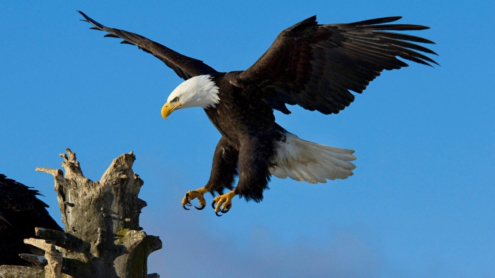Pictures Of The Eagle