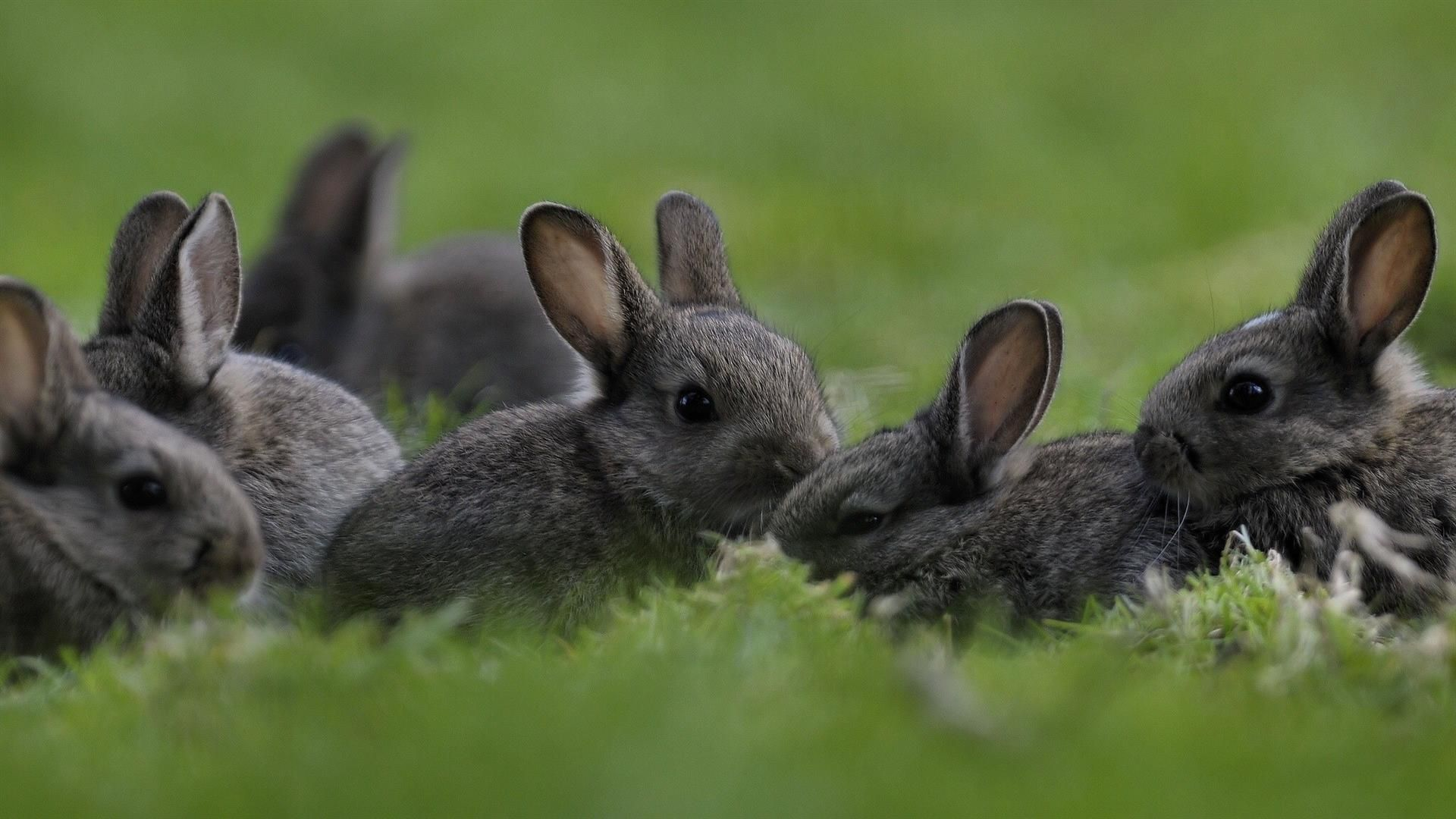 Pictures Of The Hare With Leverets