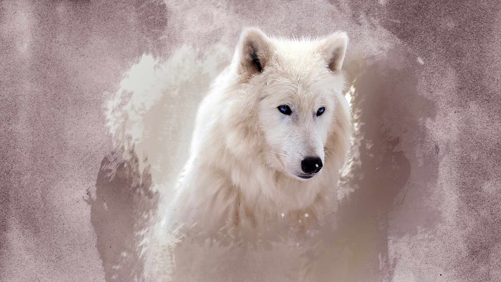 Pictures Of The White Wolf