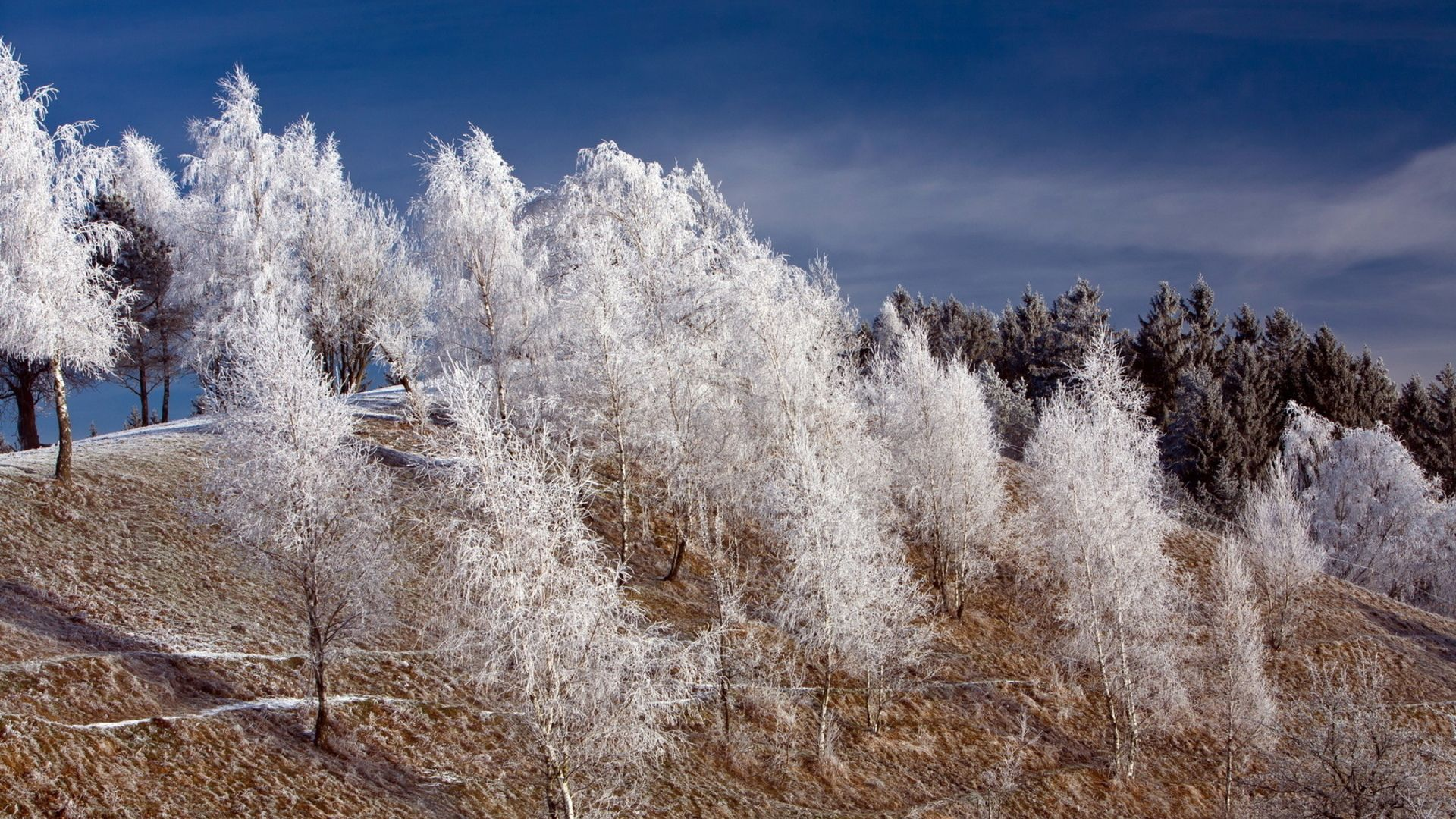 Pictures Of Trees In Frost Winter