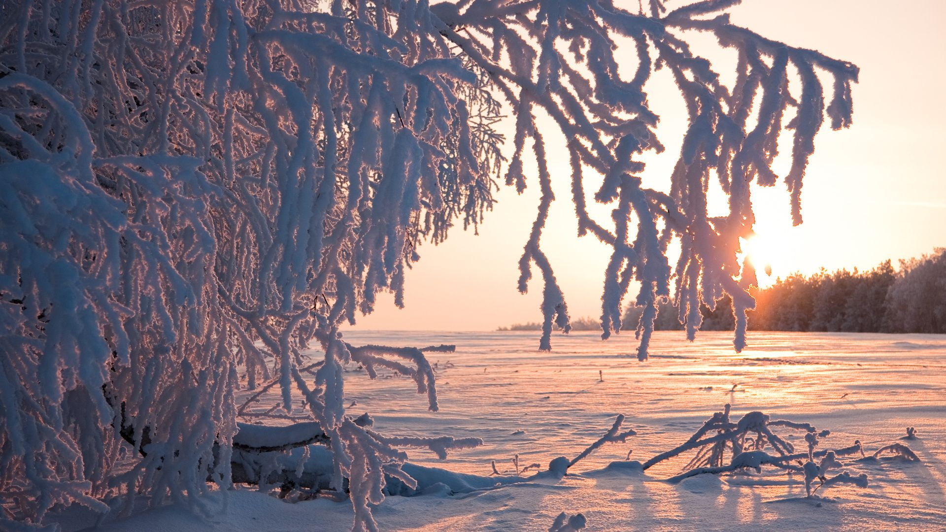Pictures Of Winter Trees In Frost