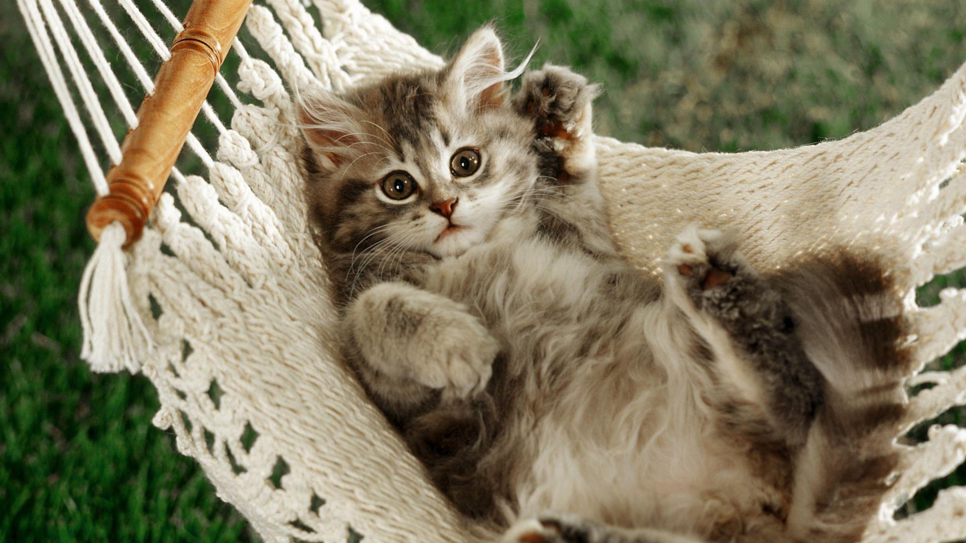 Pictures On The Desktop Kitties