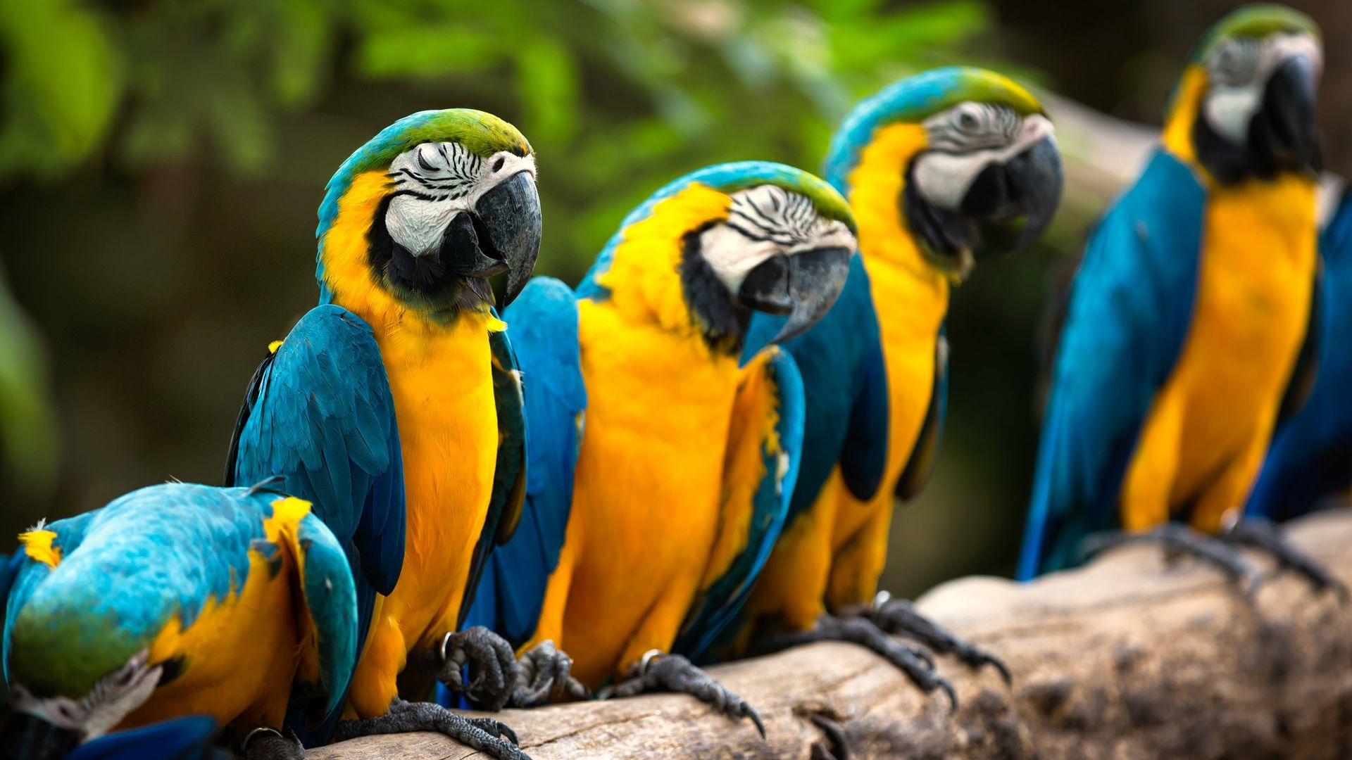 Pictures On The Desktop Parrots