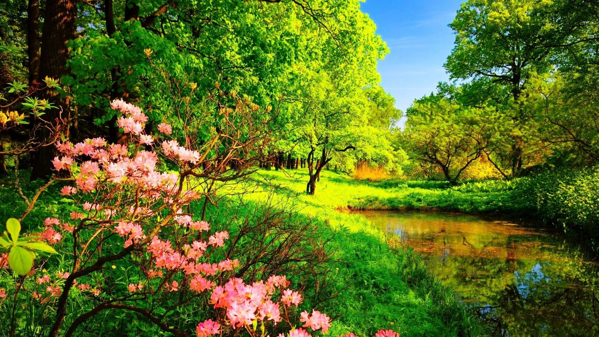 Pictures Spring Beautiful Nature