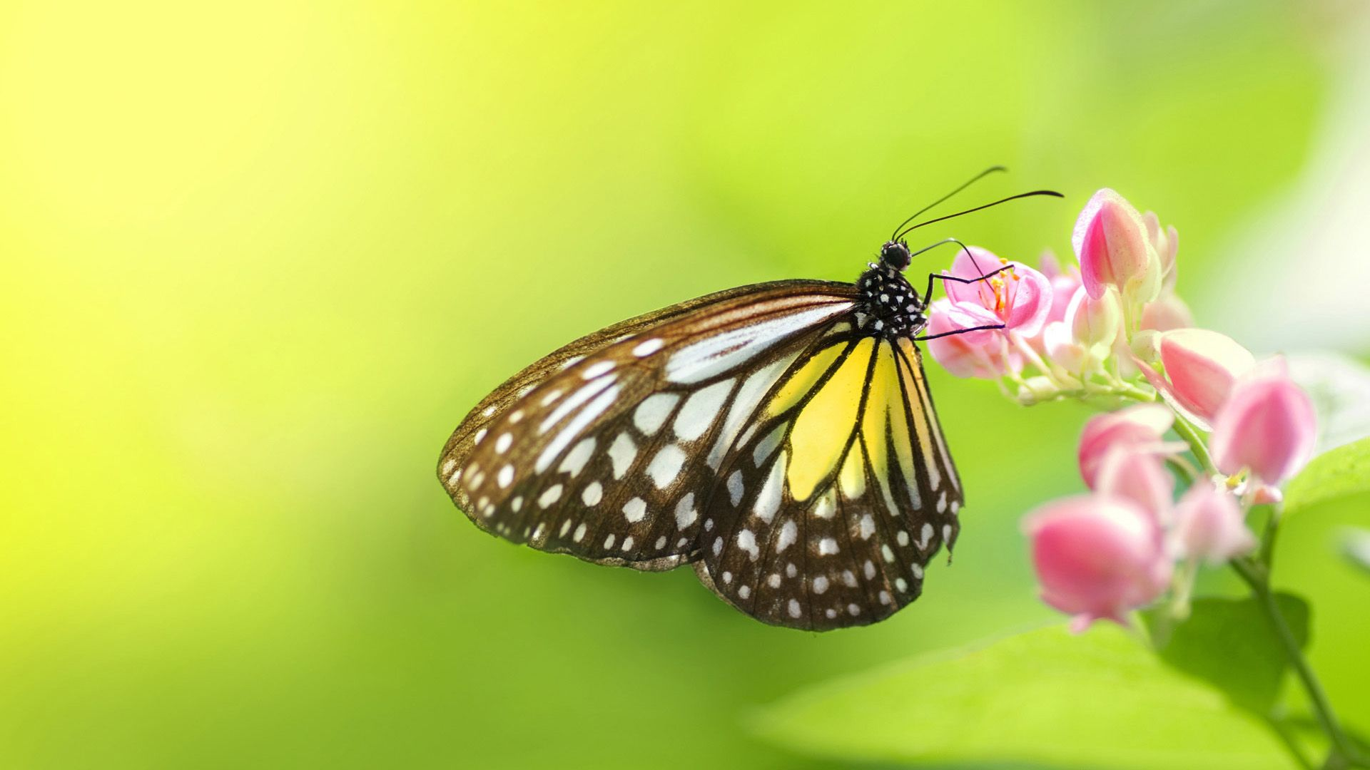 Pictures Summer Butterfly