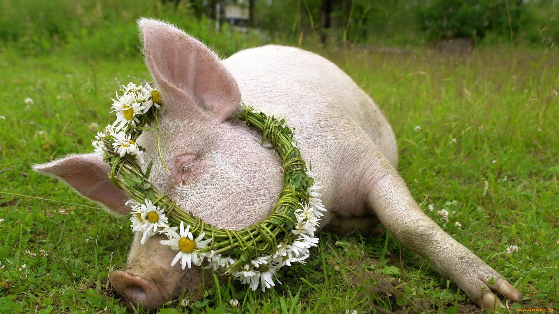 Pig In Flowers