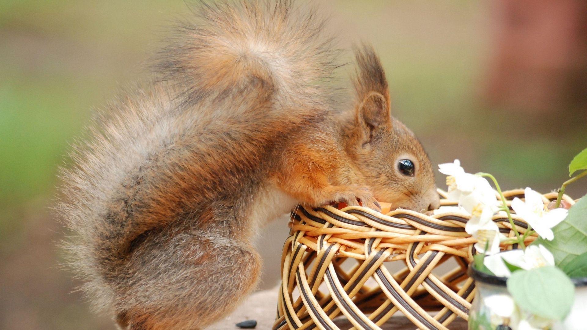 Protein Basket