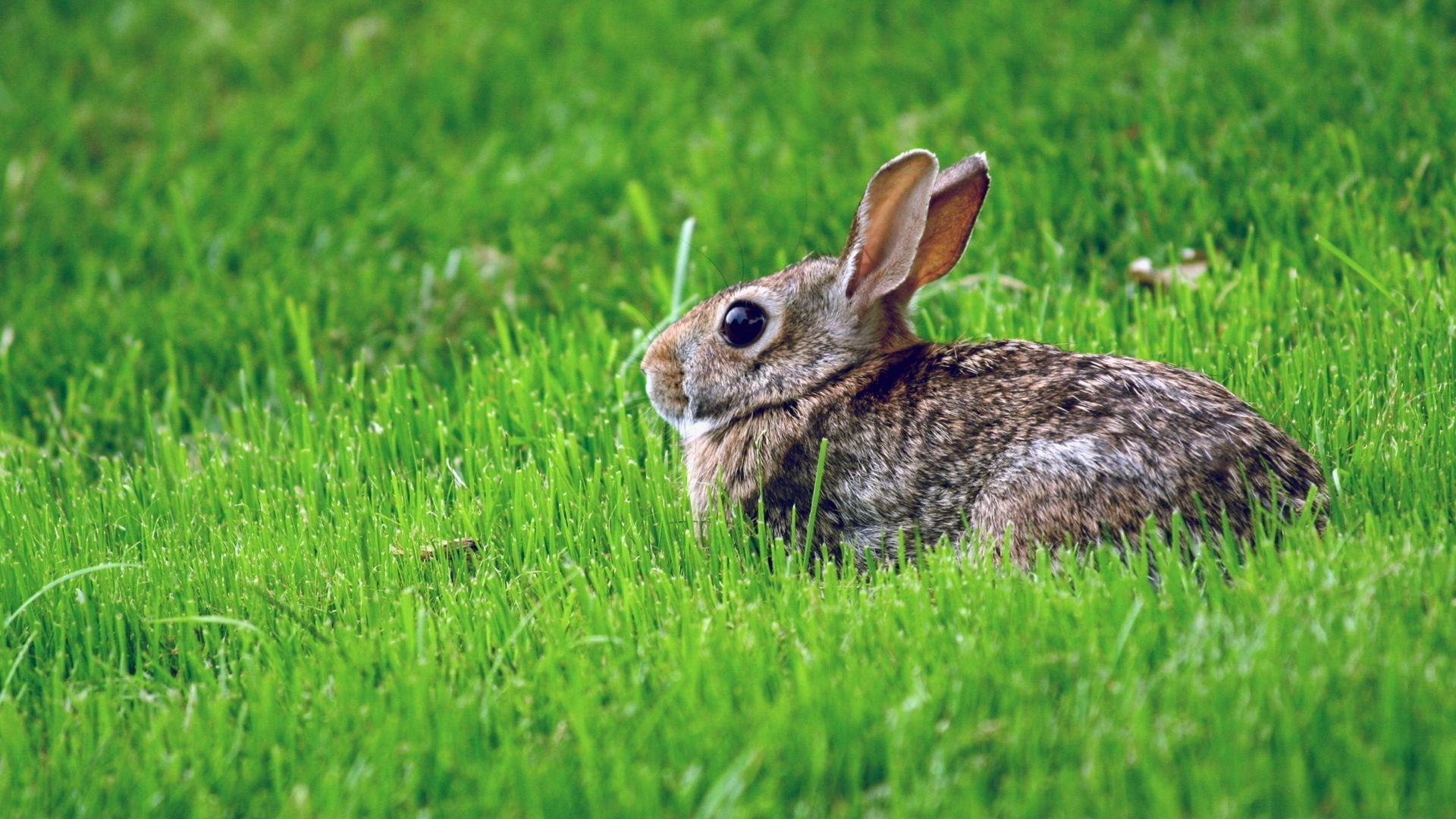 Rabbit In The Grass Pictures