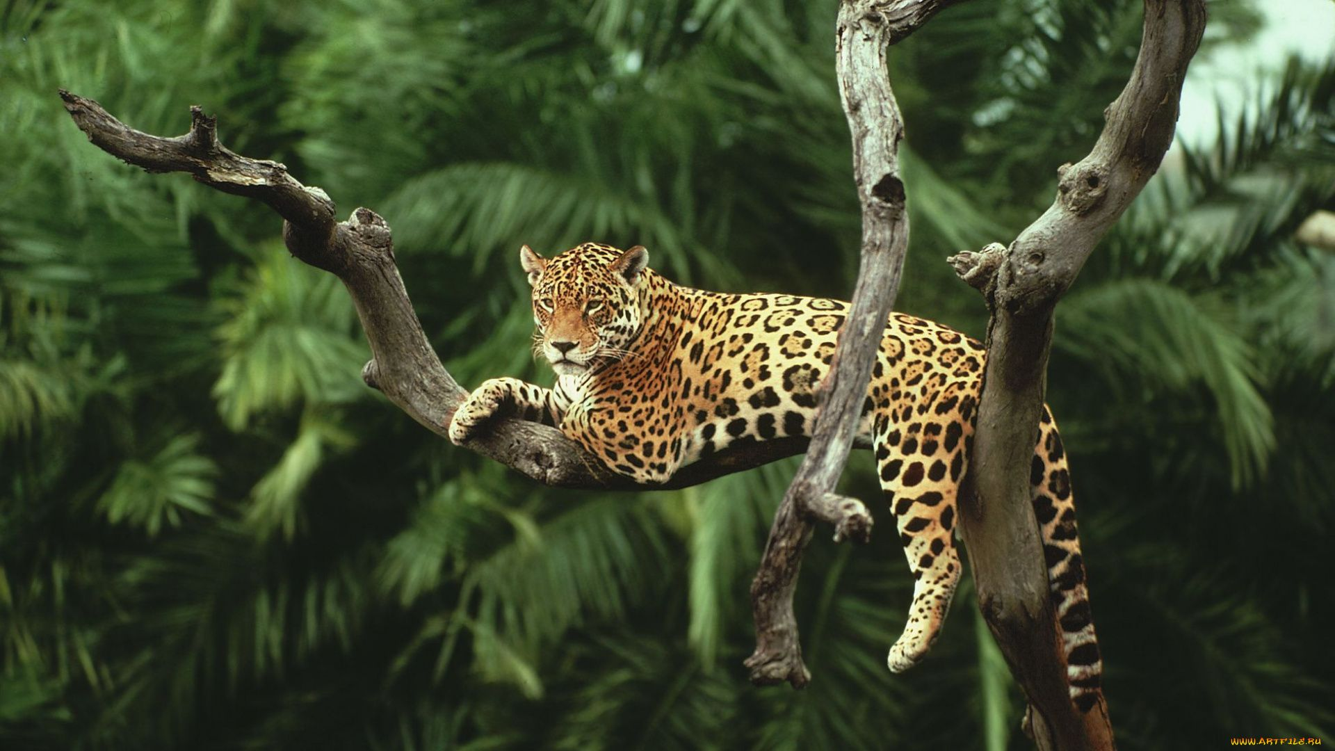 Rainforest Pictures With Animals