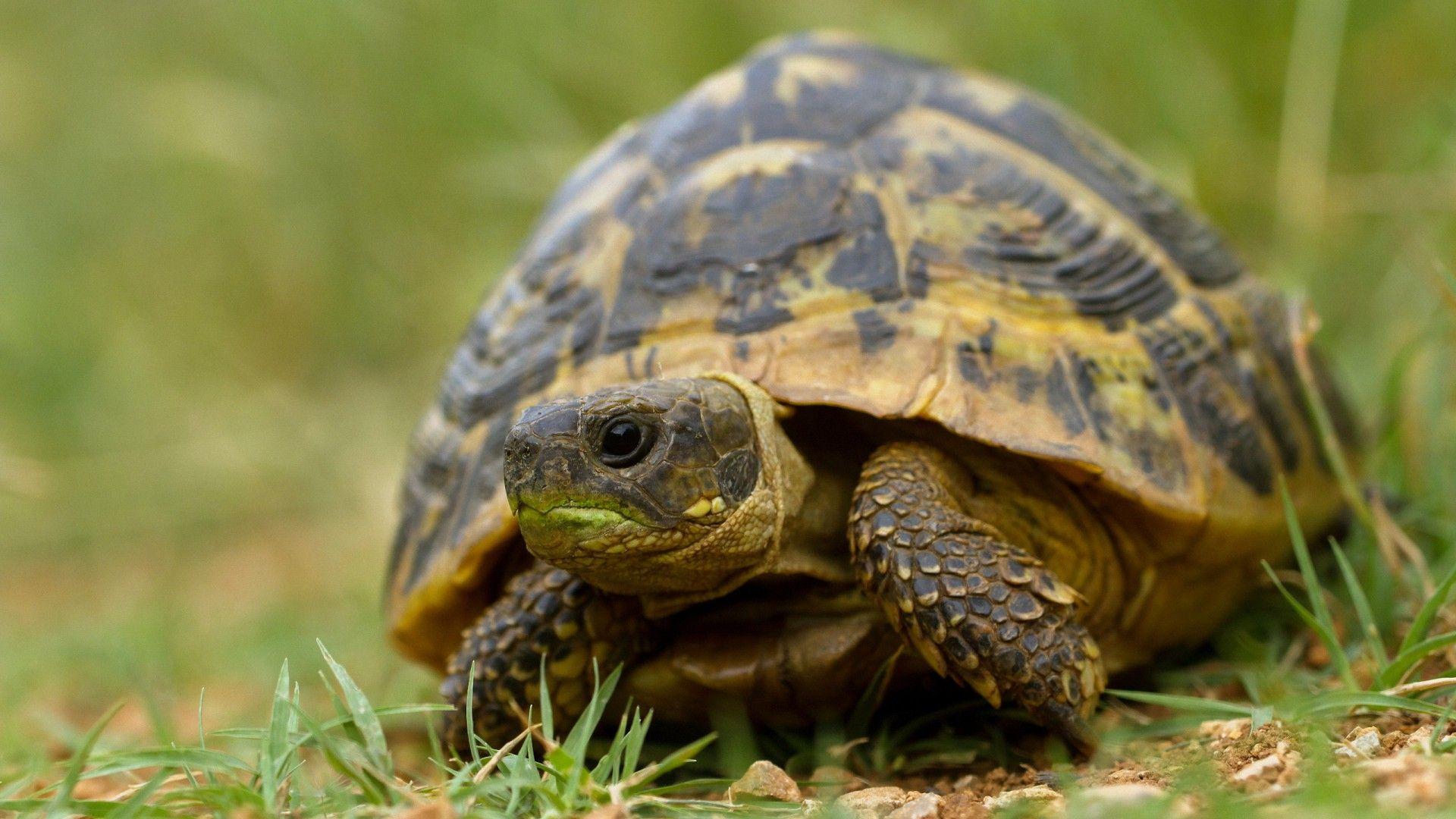 Reptiles Turtles
