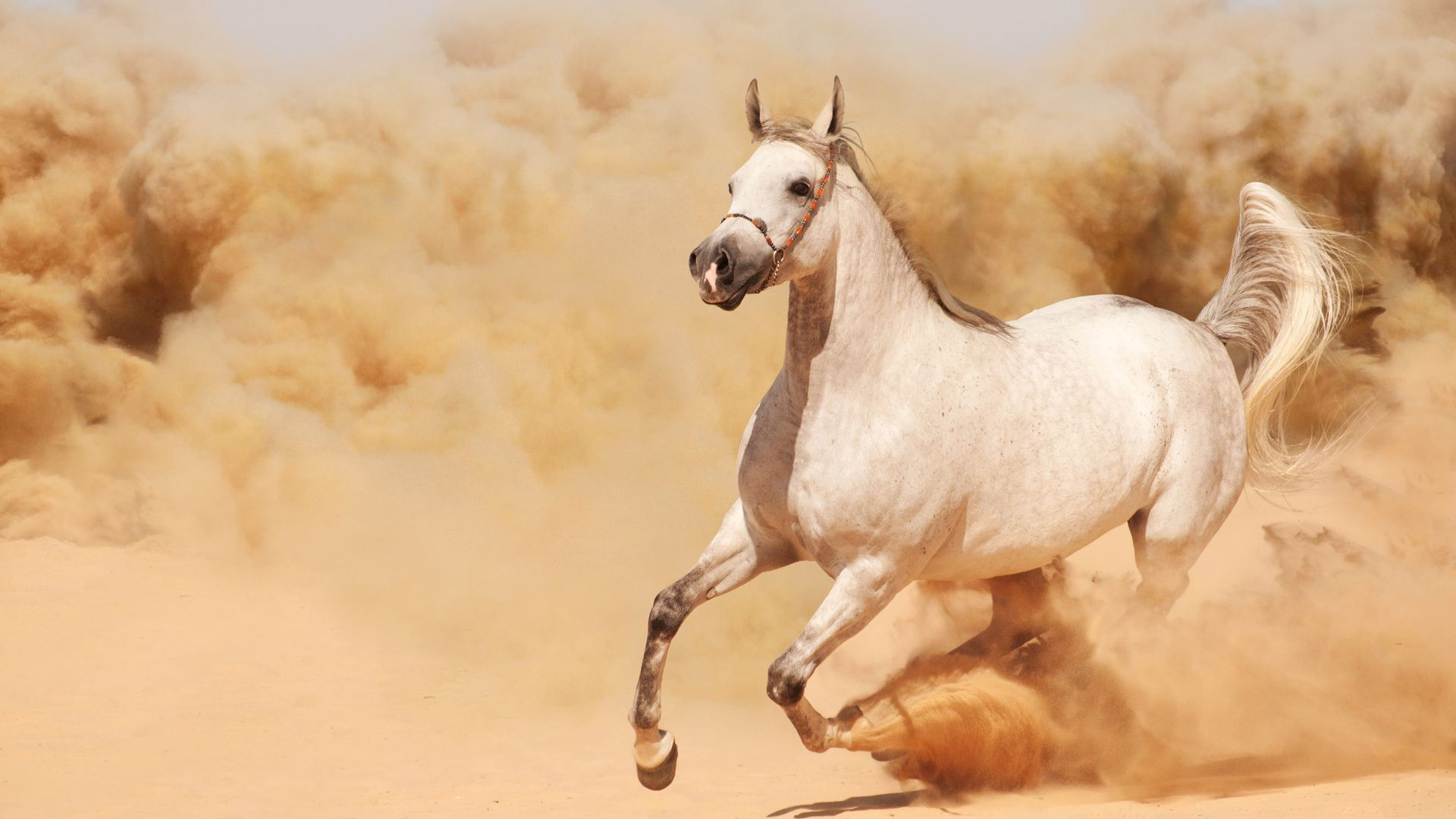 Running Horse Pictures