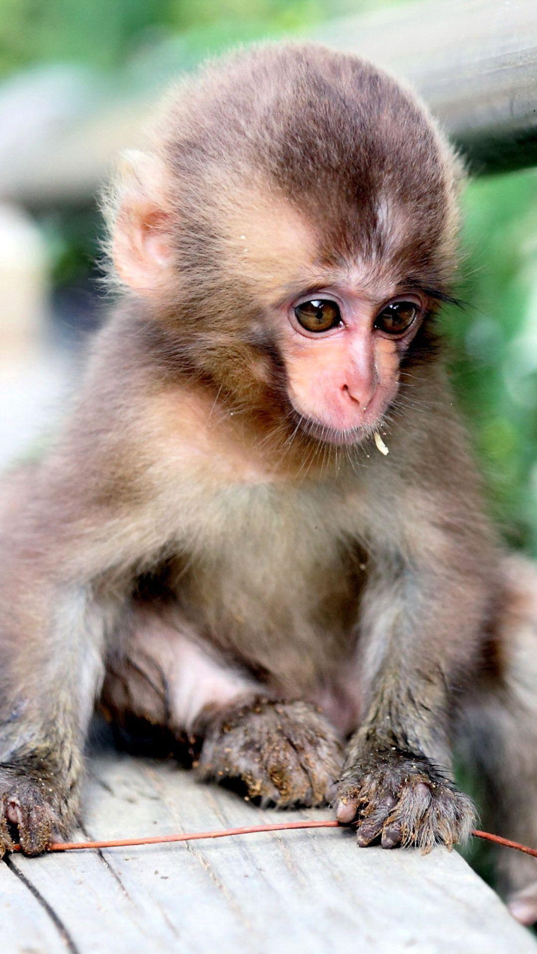 Sad Monkey Pictures