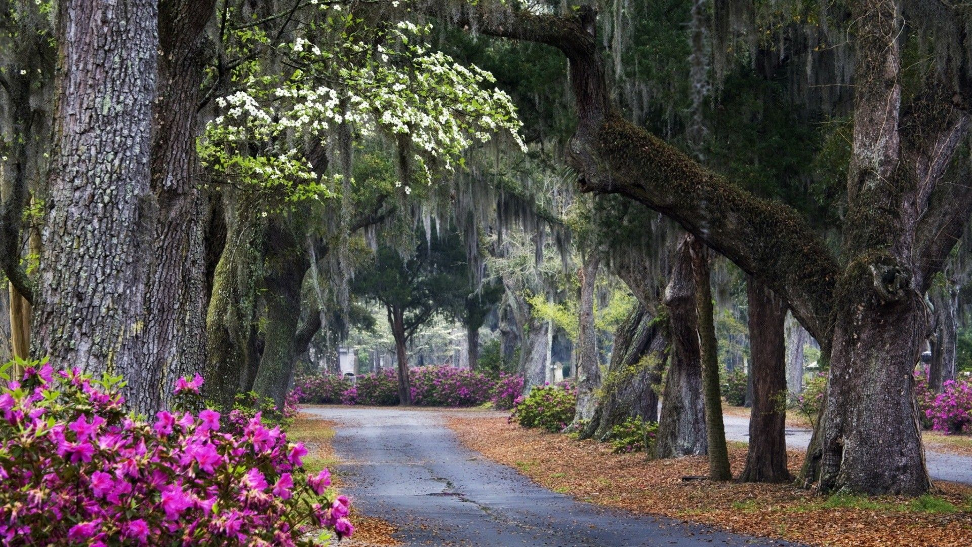 Savannah Usa Trees