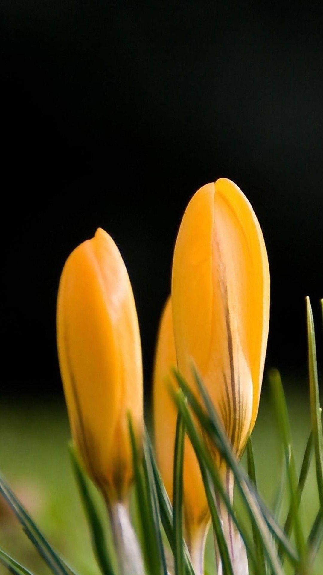 Saver Spring Iphone Yellow