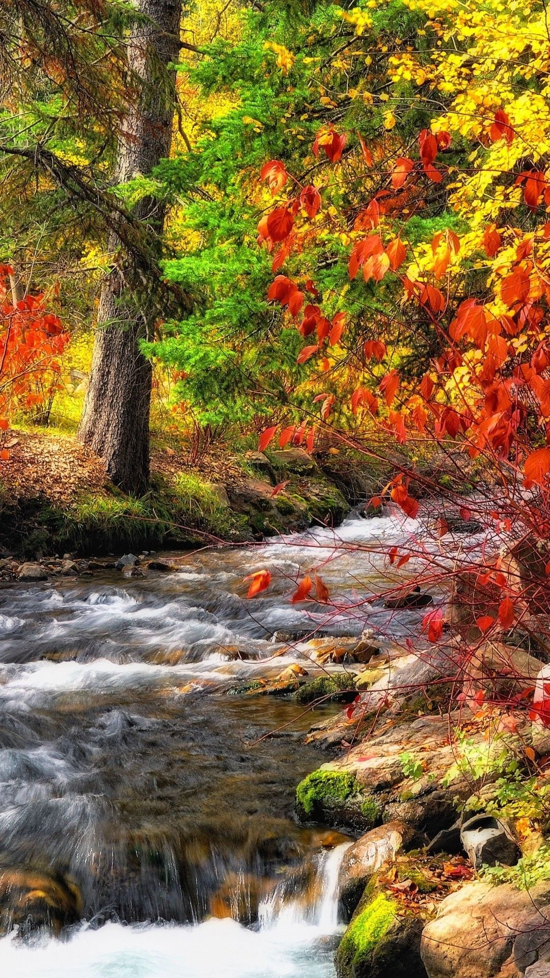 Screensaver Autumn