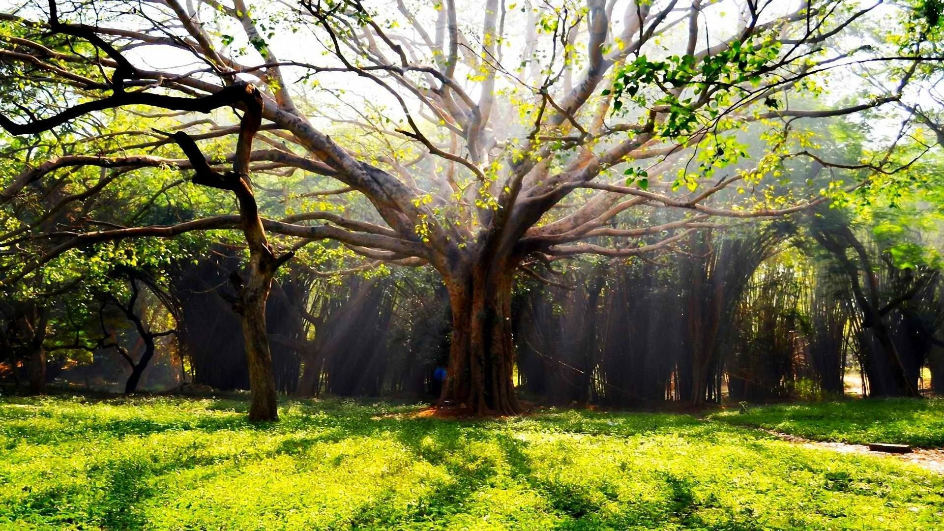 Screensaver Tree
