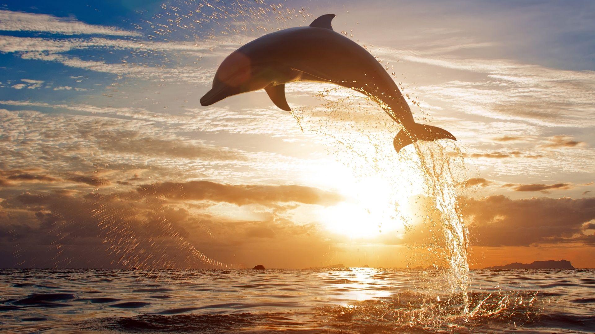 Sea Sunset Dolphins