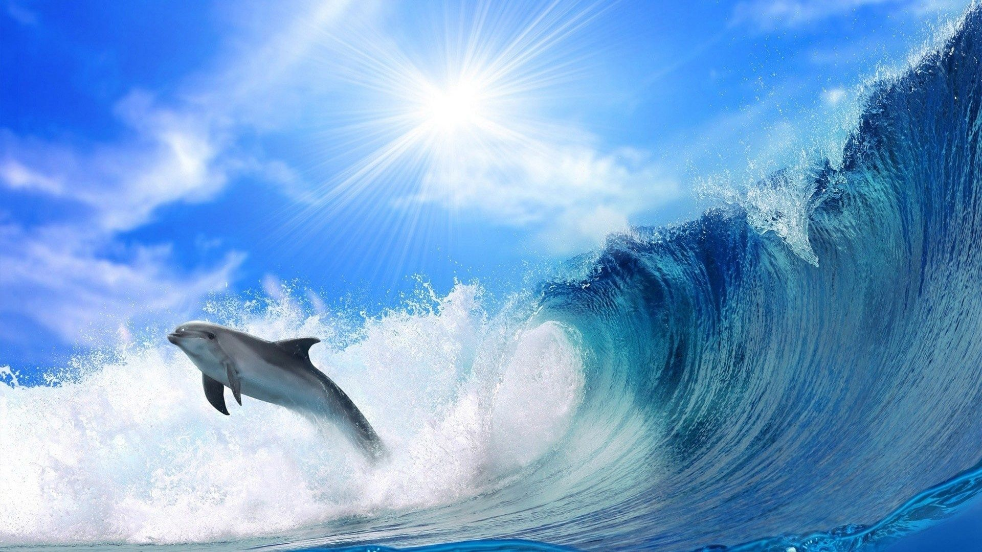 Sea Wave Dolphin