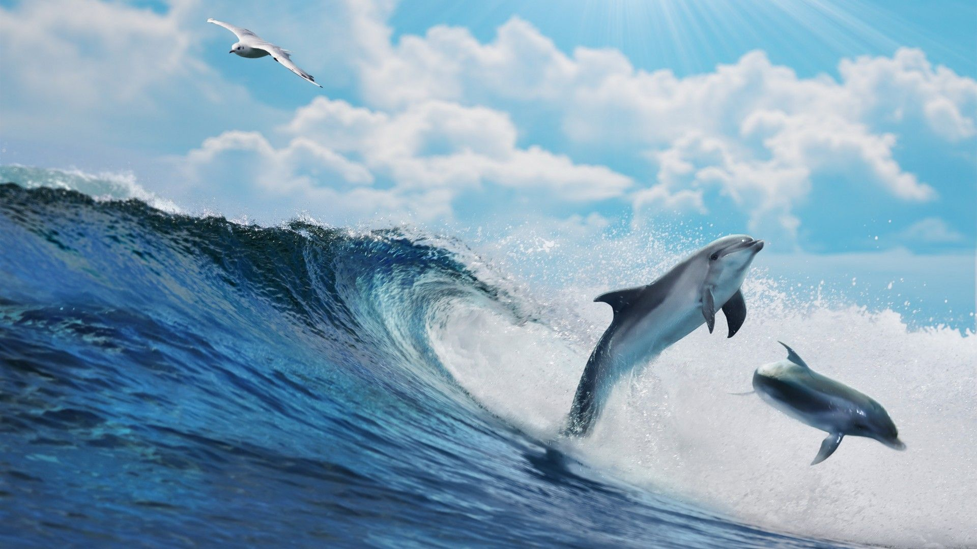 Seascape With Dolphins Photos