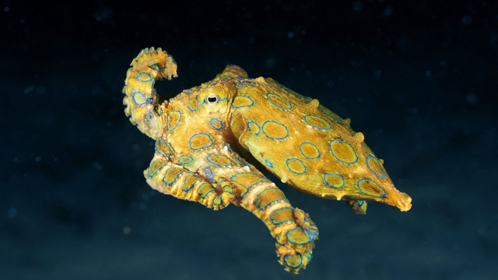 Sincerity Octopus Photo