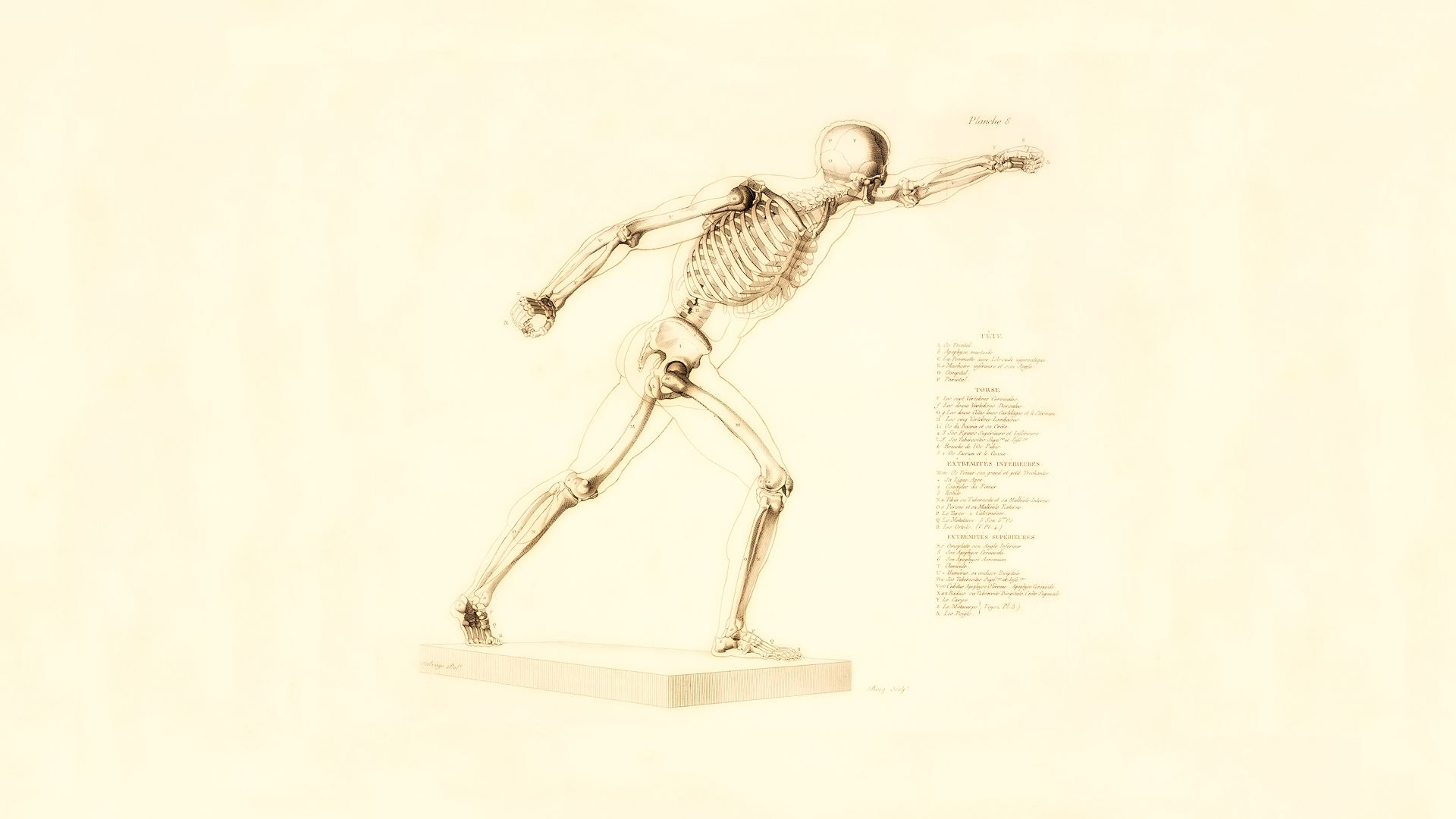 Skeleton In Motion Picture
