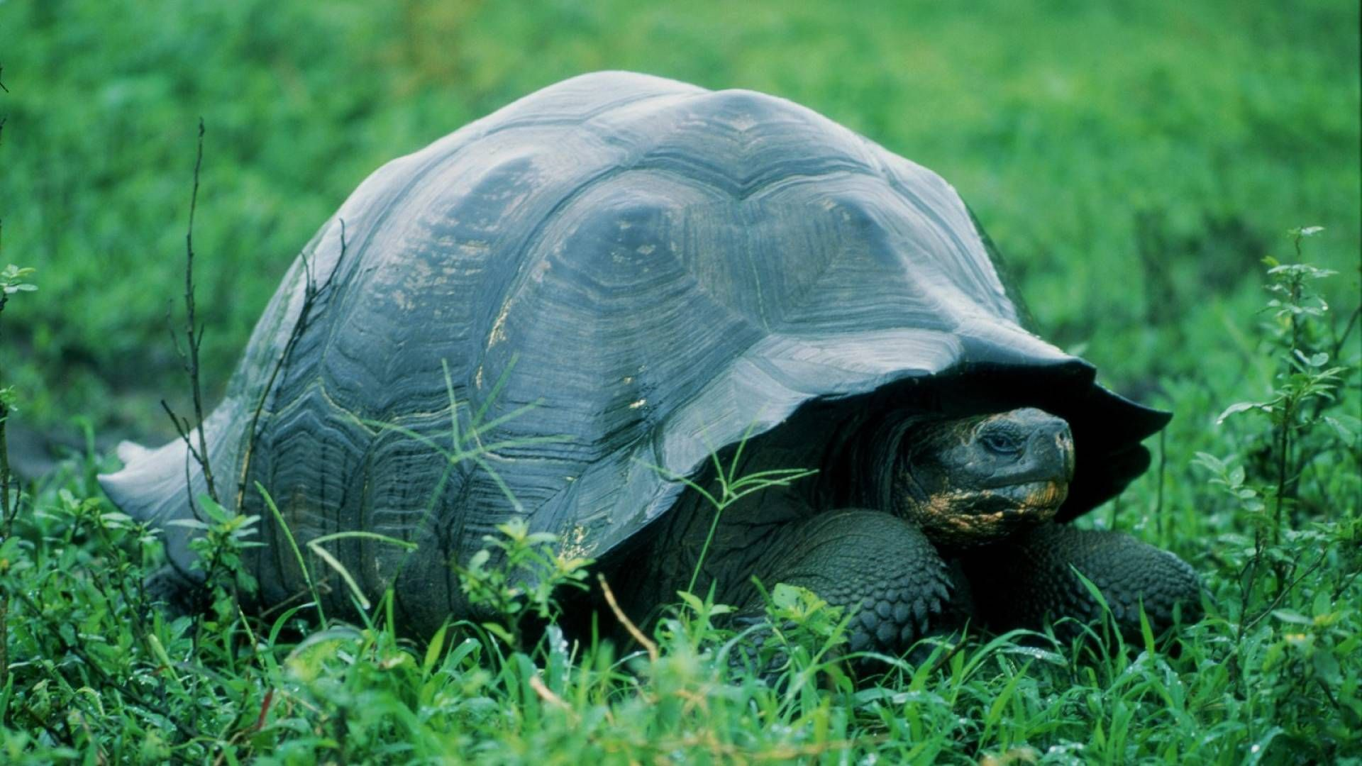 Skriesana Turtles