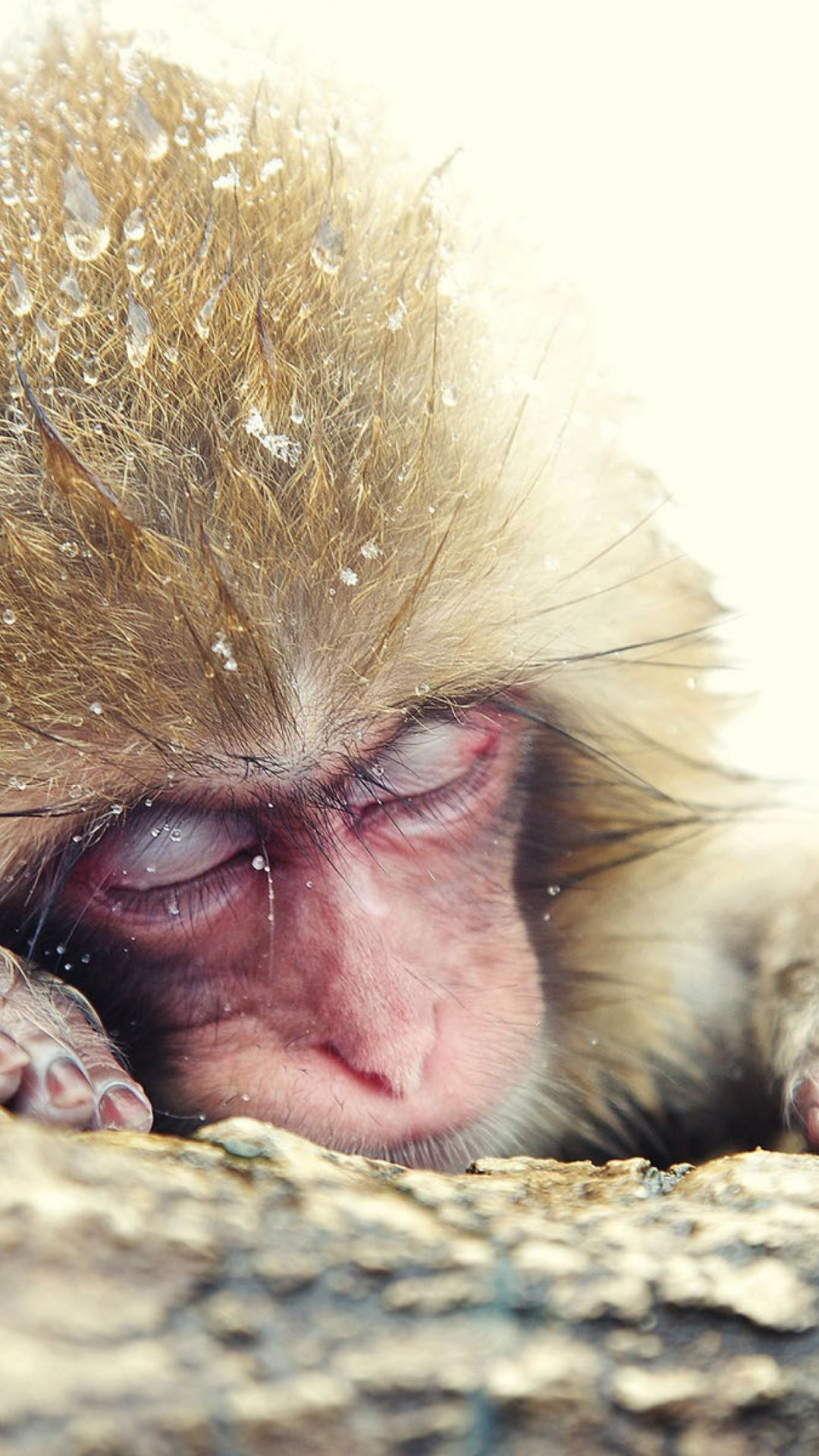 Sleepy Monkey Photo