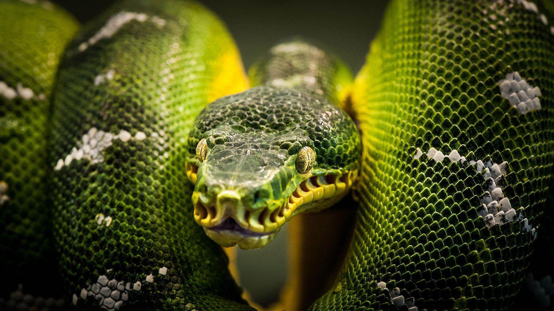 Snake Photo Picture Beautiful