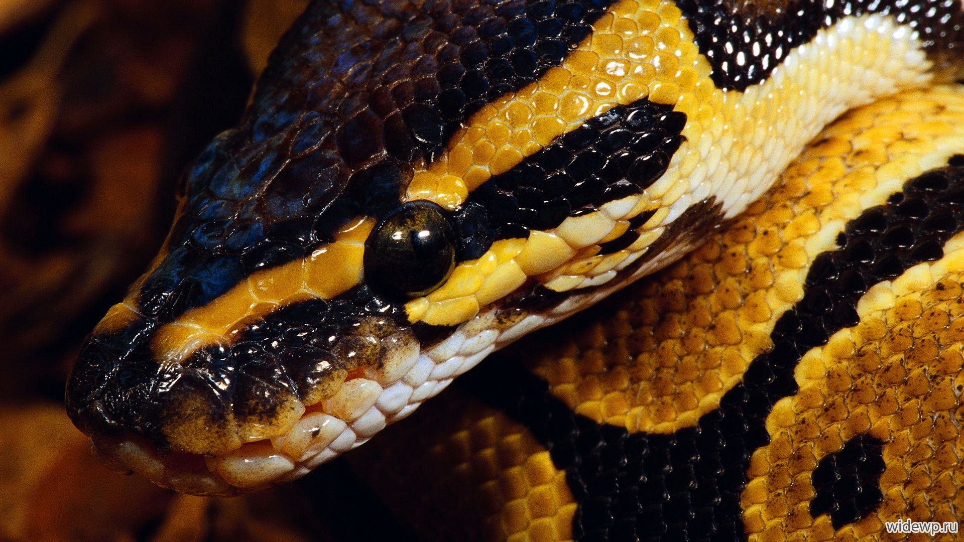 Snake Photo Picture