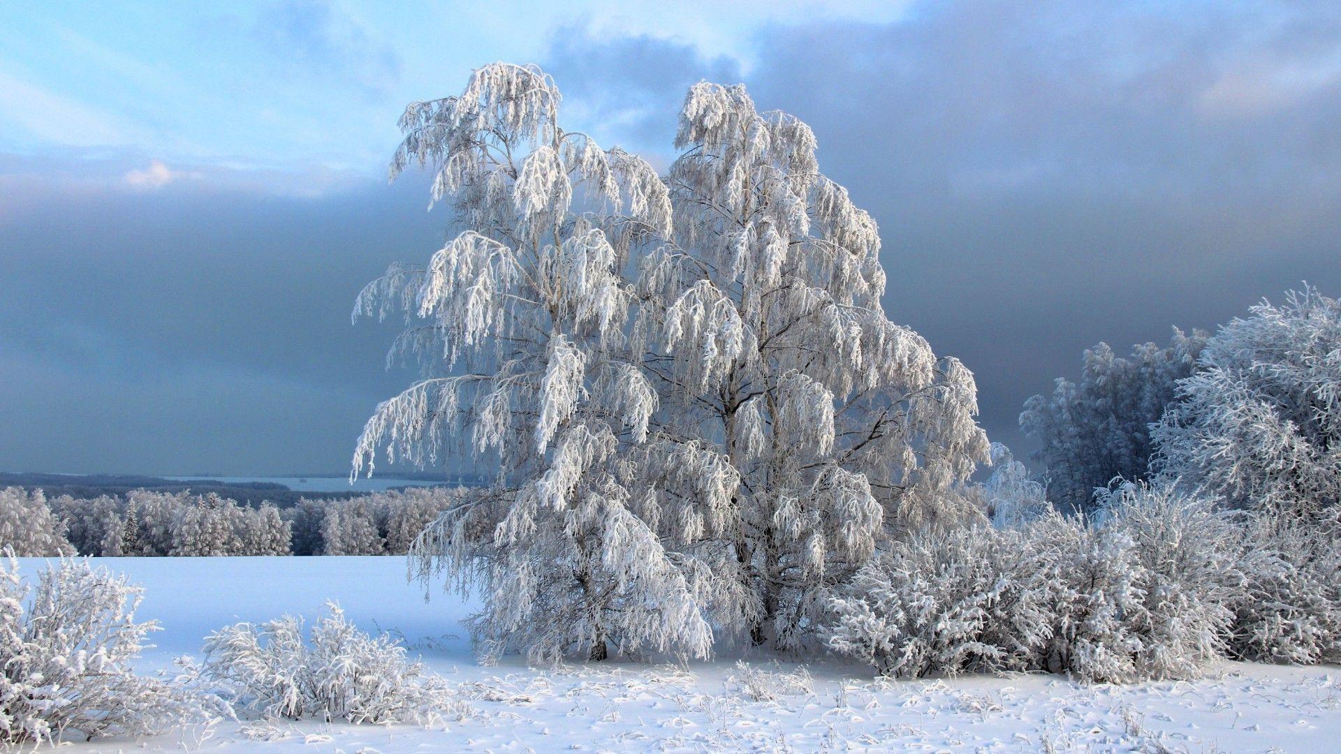 Snowy Landscape Photos