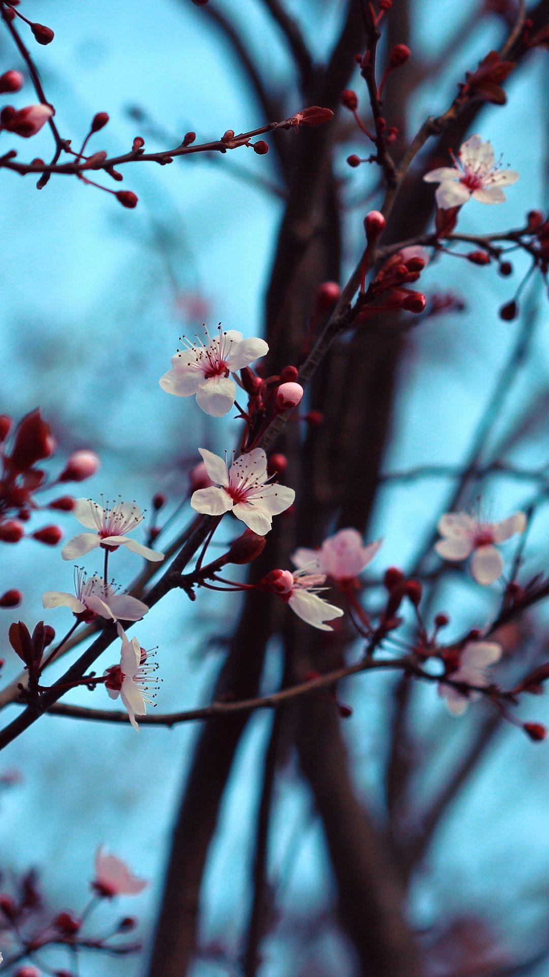 Spring Branch Photo