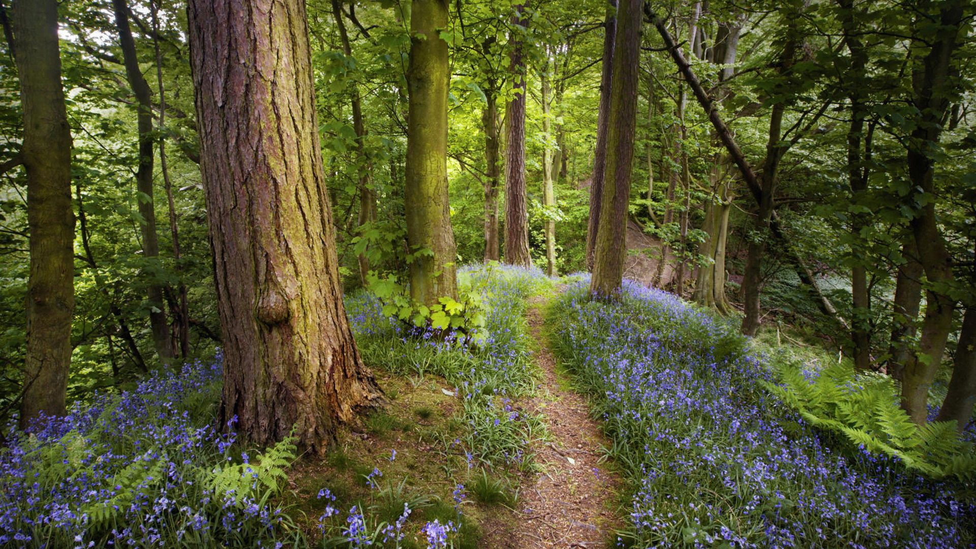 Spring Forest Wallpaper
