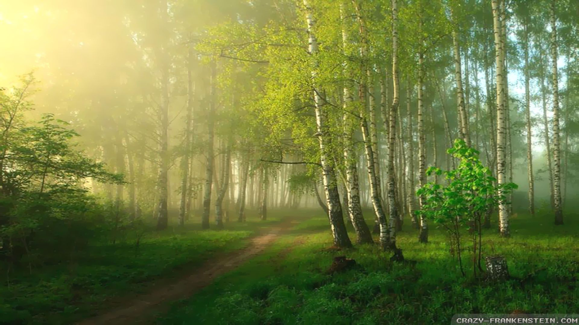 Spring Forest Wallpapers Hd