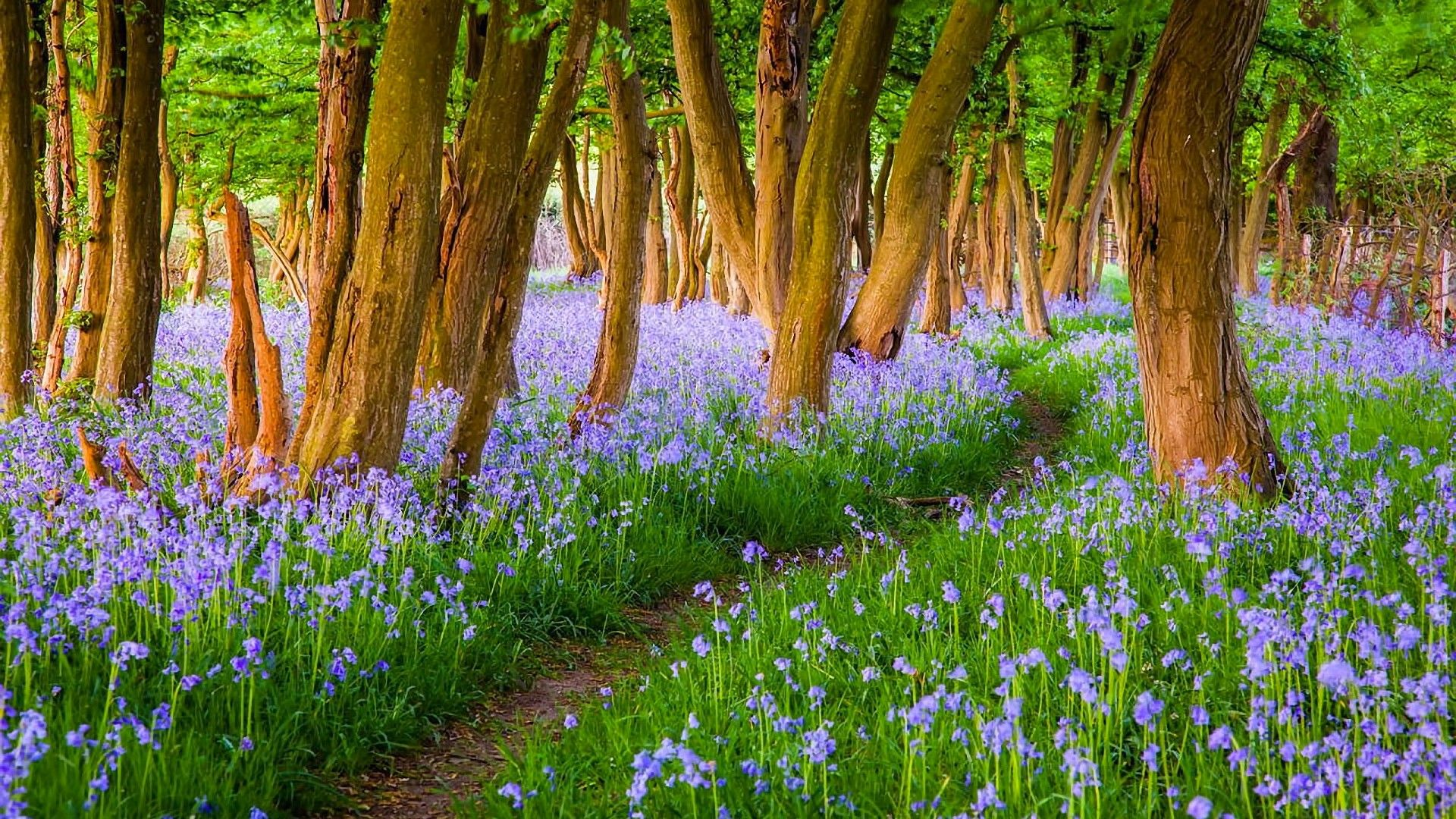 Spring Forest Wallpapers Images