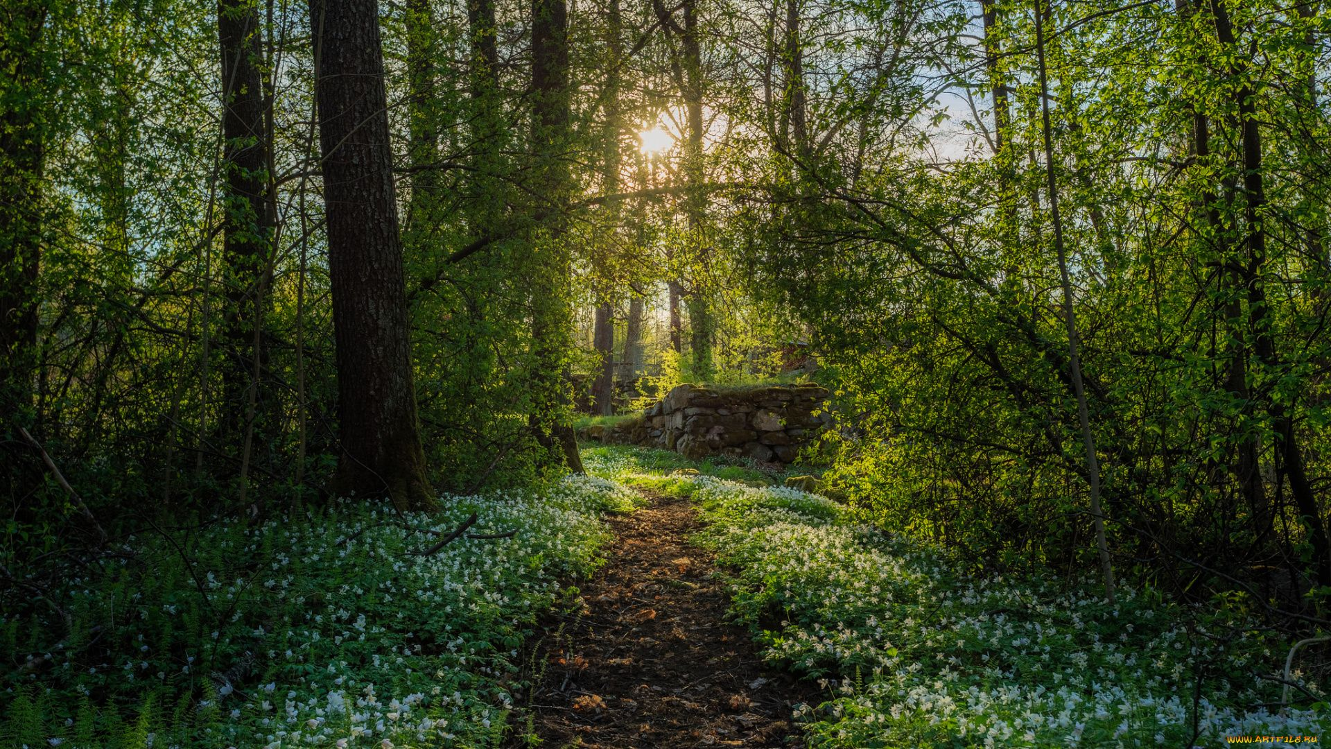 Spring In The Forest Beautiful Photos