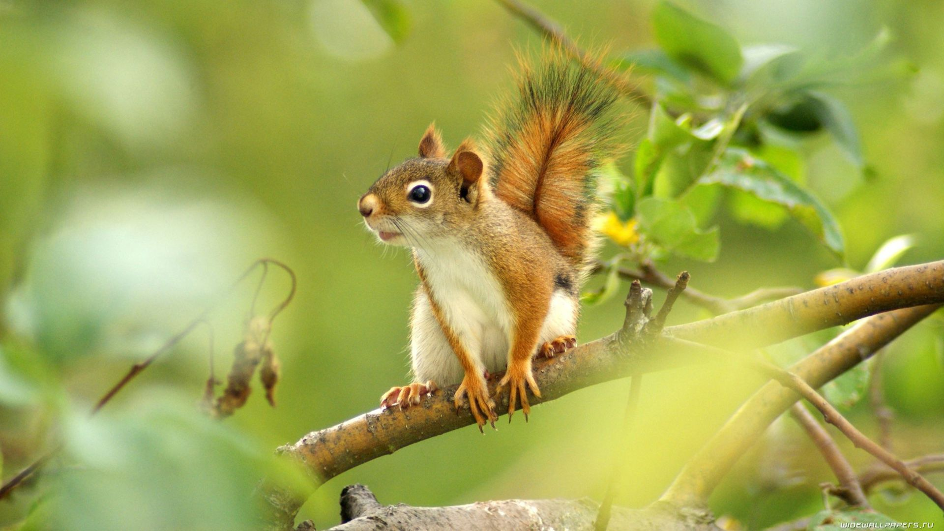 Squirrel In The Forest Wallpaper