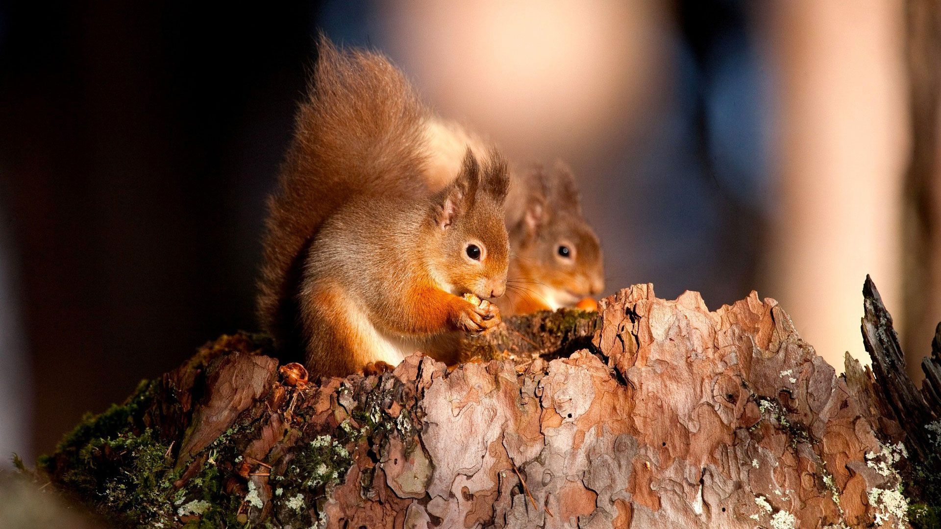 Squirrel With Cubs