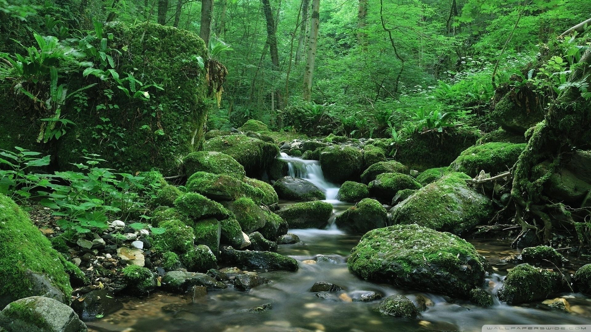 Stream In The Woods Pictures