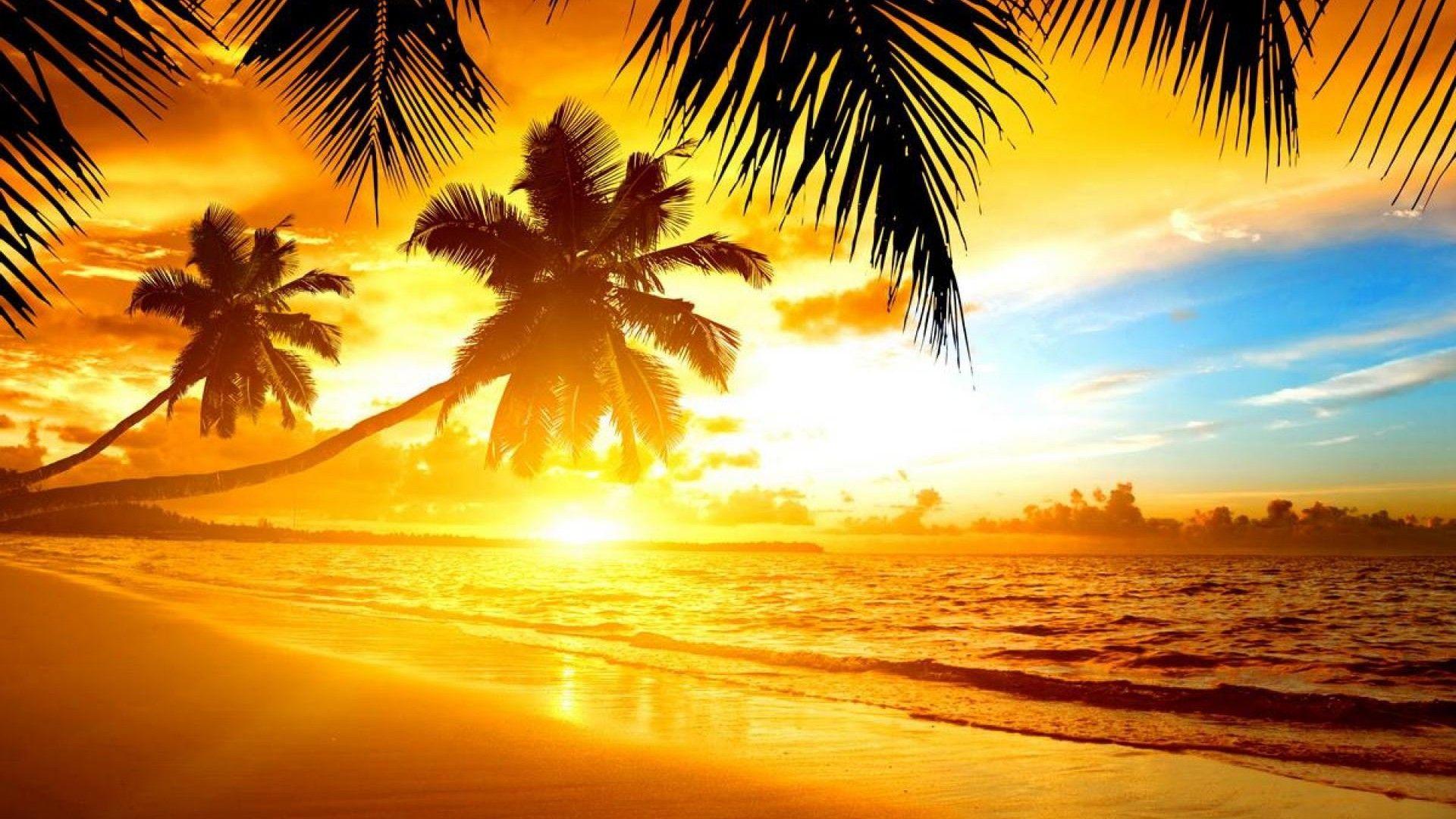 Sunrise Palms Sea Photo