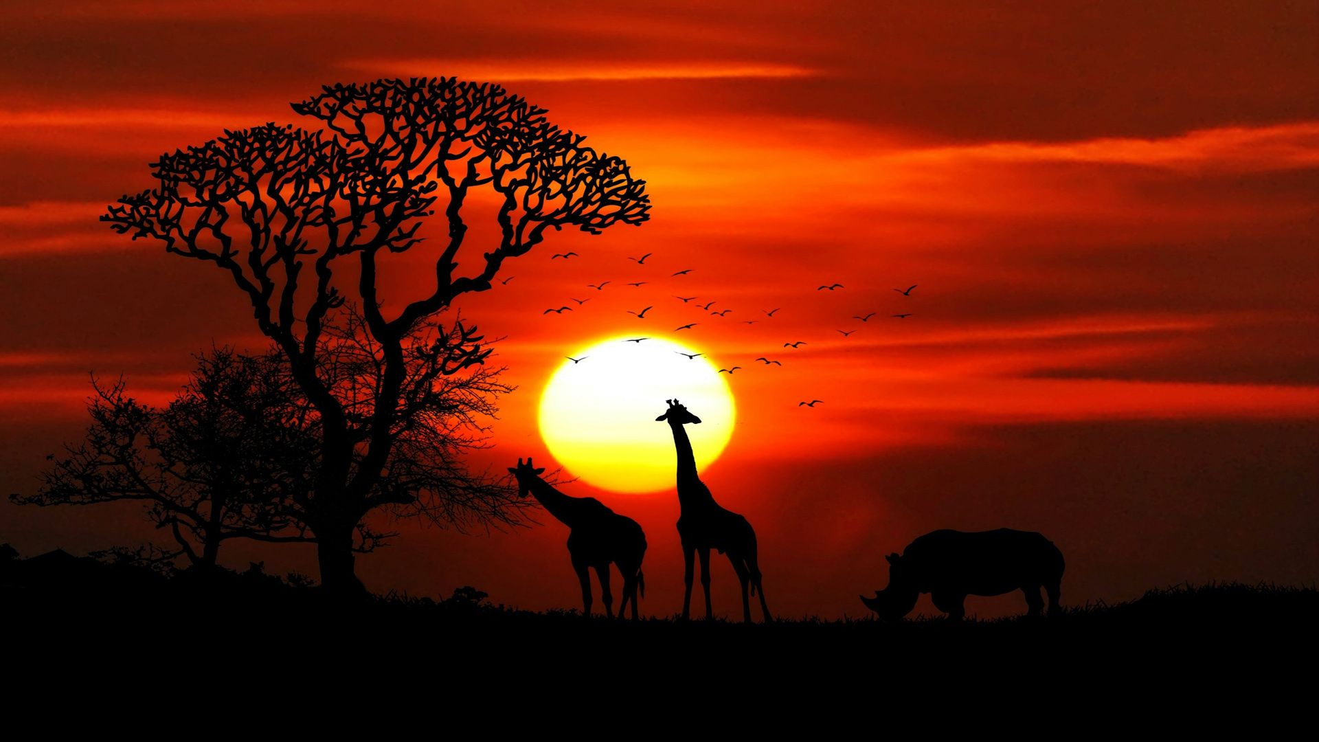 Sunset In The Savanna Pictures