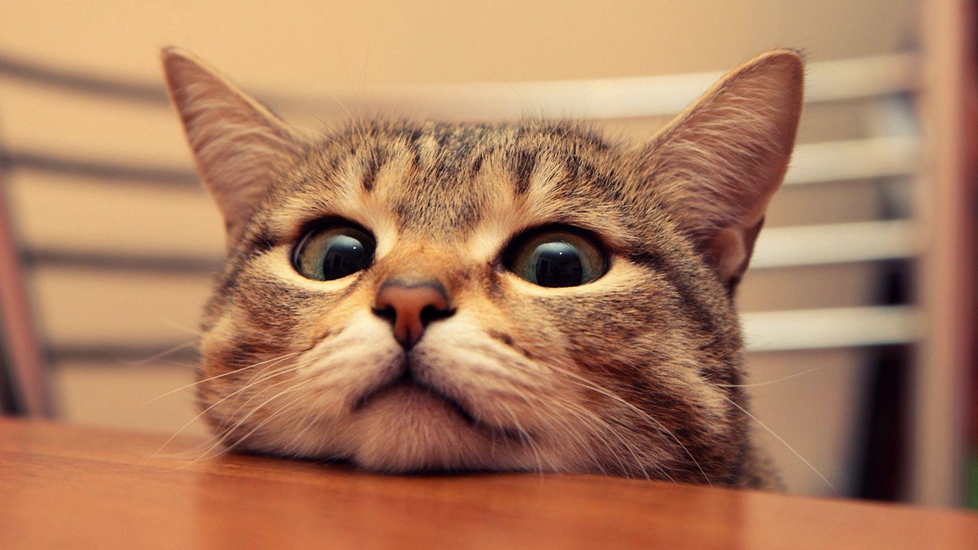 Surprised Cat Pictures
