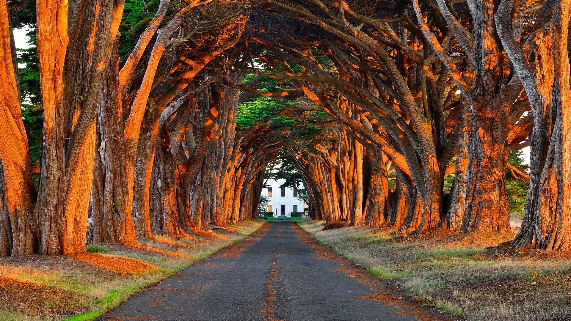 The Avenue Of Trees Photo