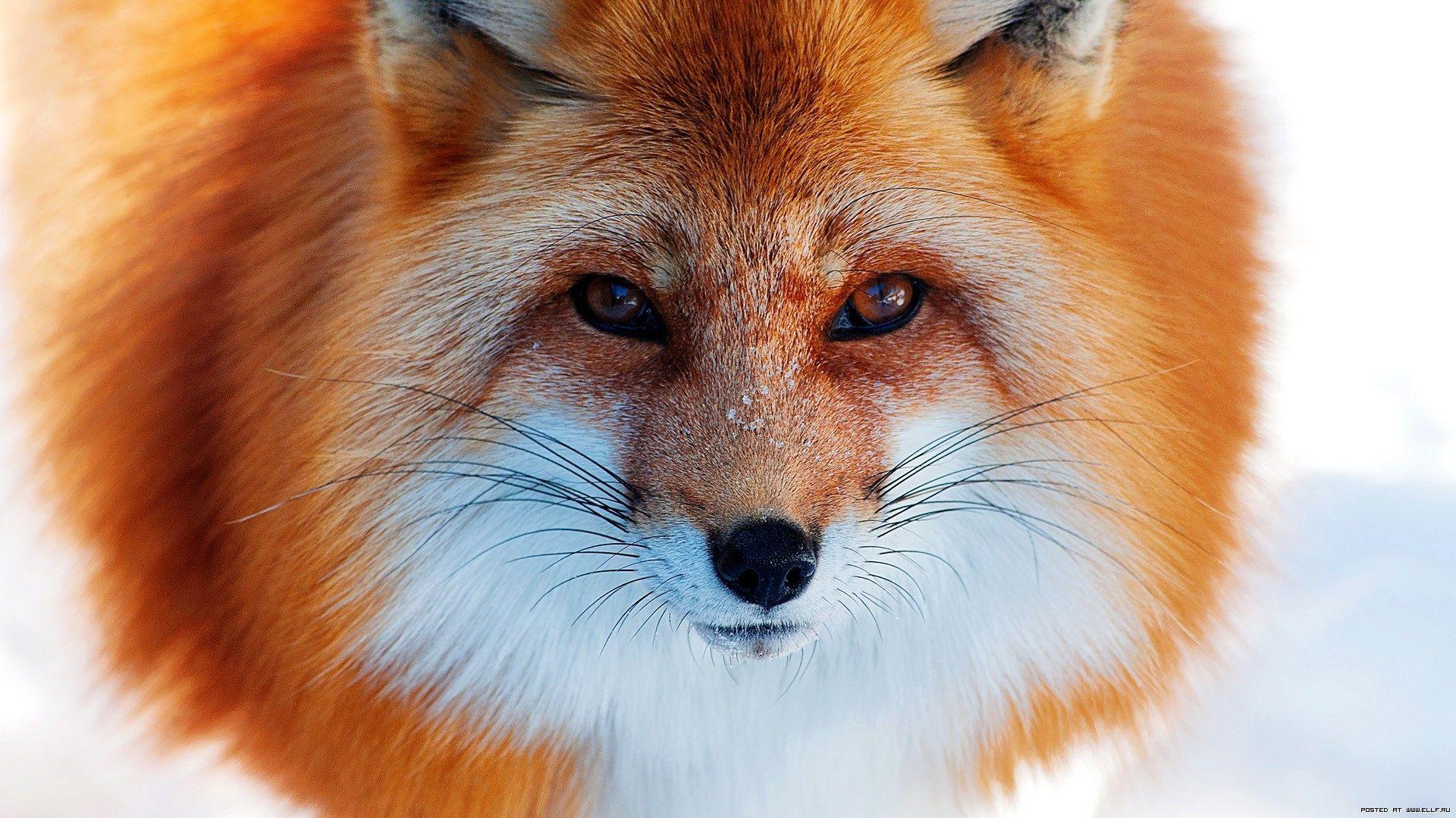 The Fox Photos