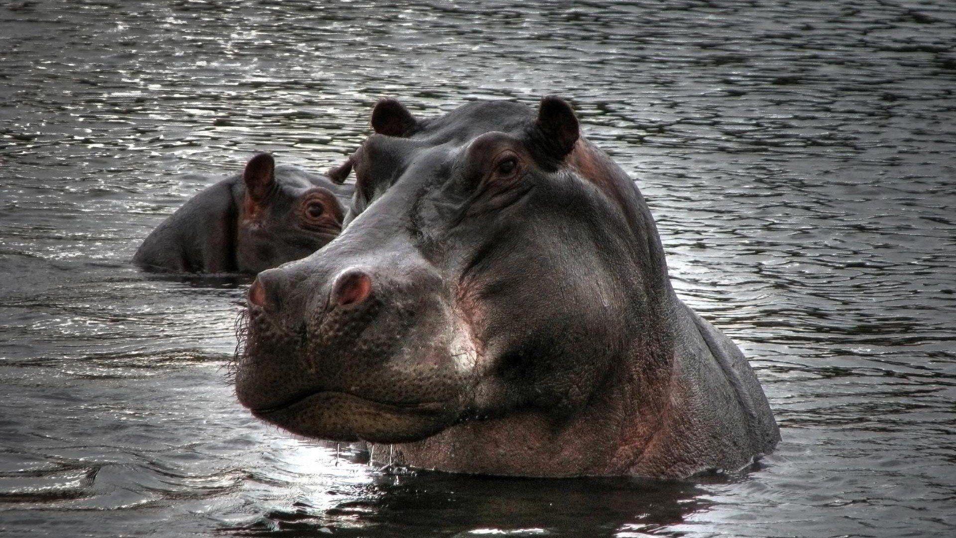The Hippo Photo