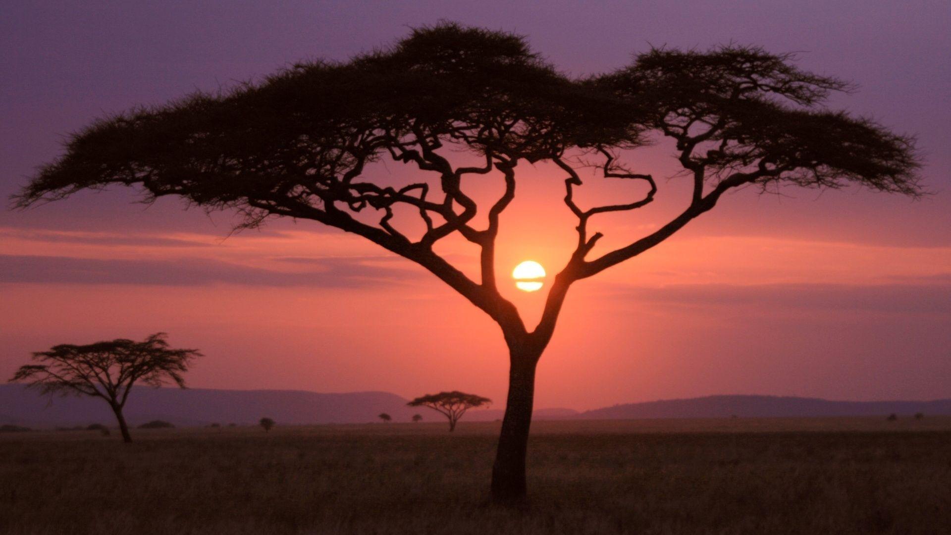 The Savannah Of Africa Hd Photo