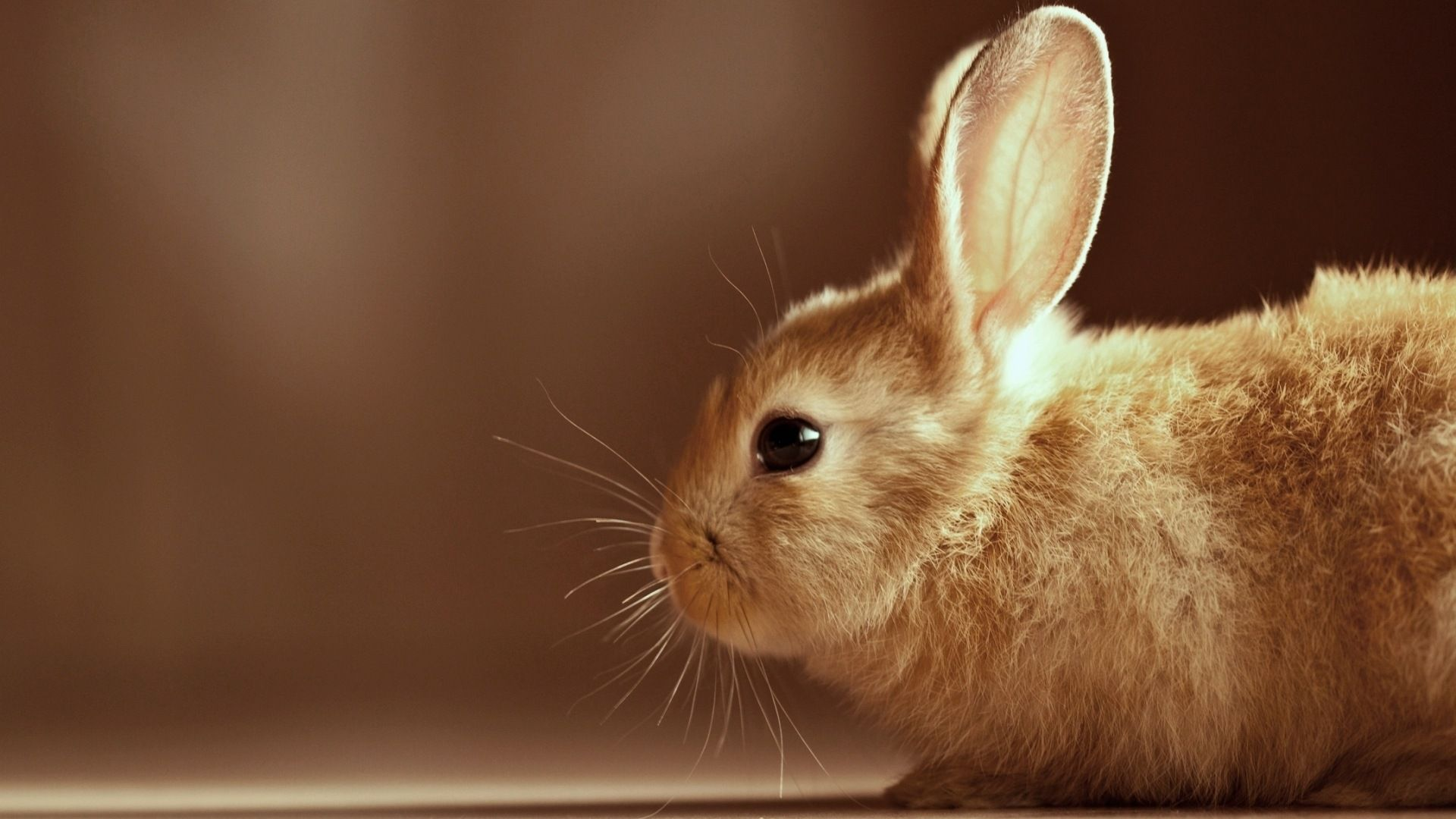 The Wallpaper Bunnies