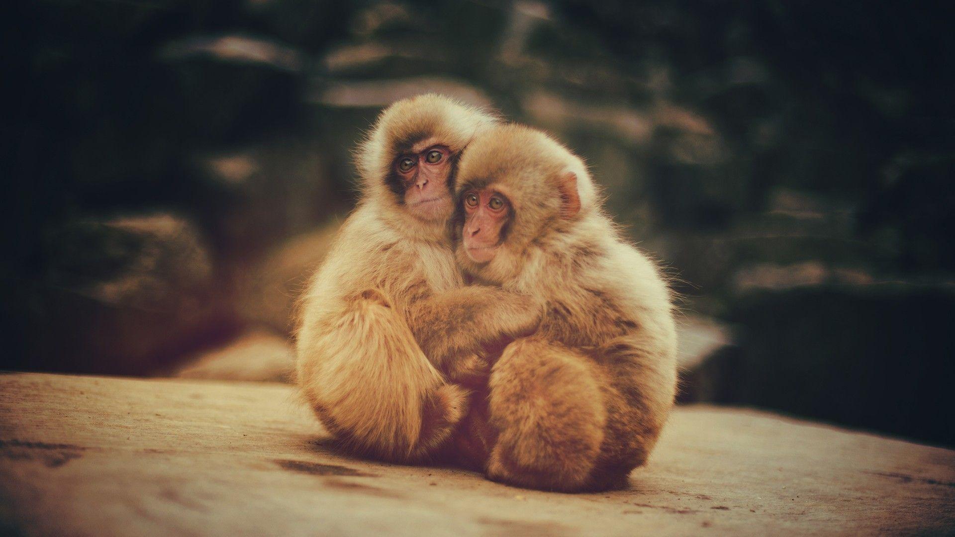 The Wallpaper Of Cute Monkeys