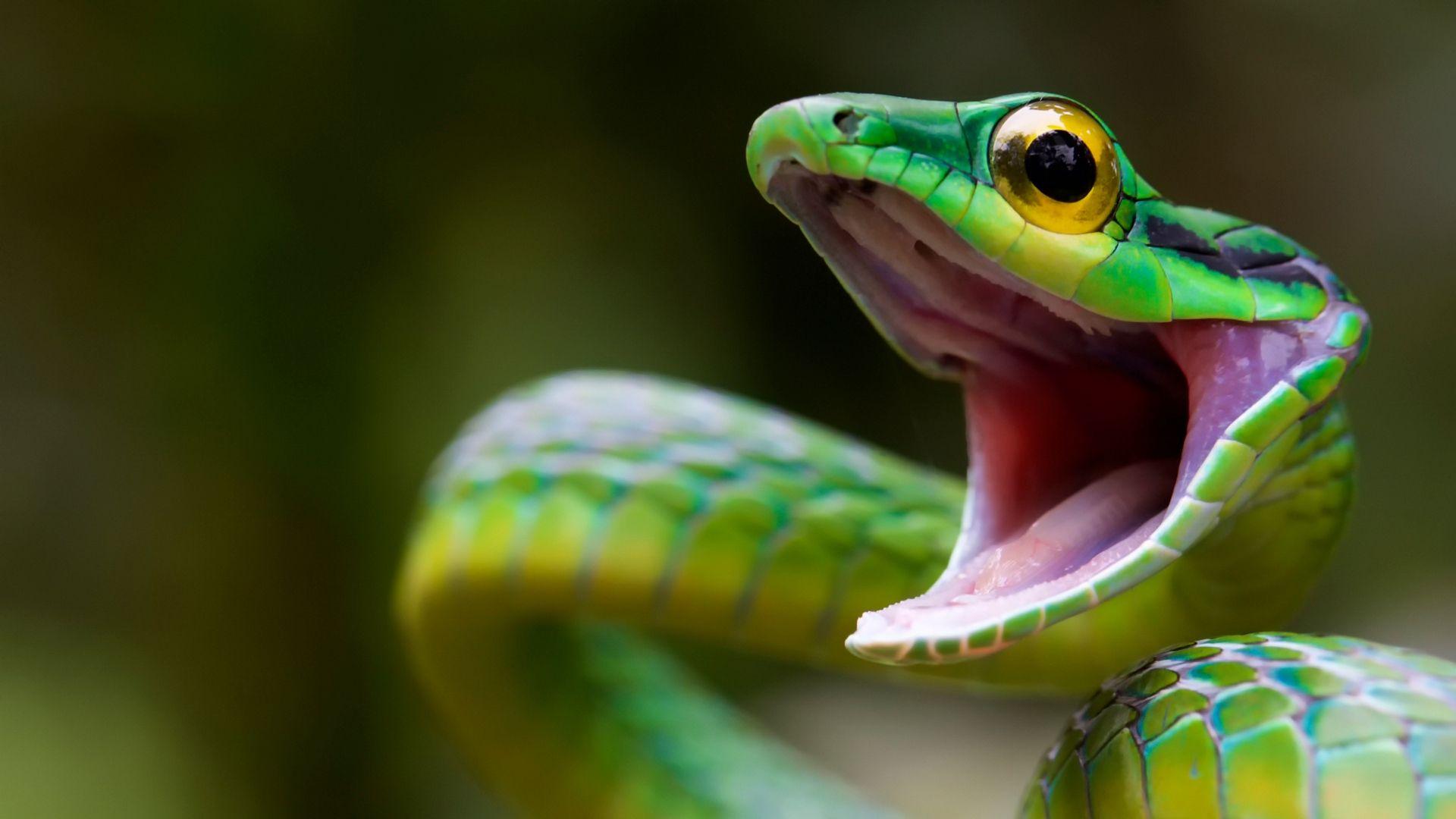 The Wallpaper Of Snake