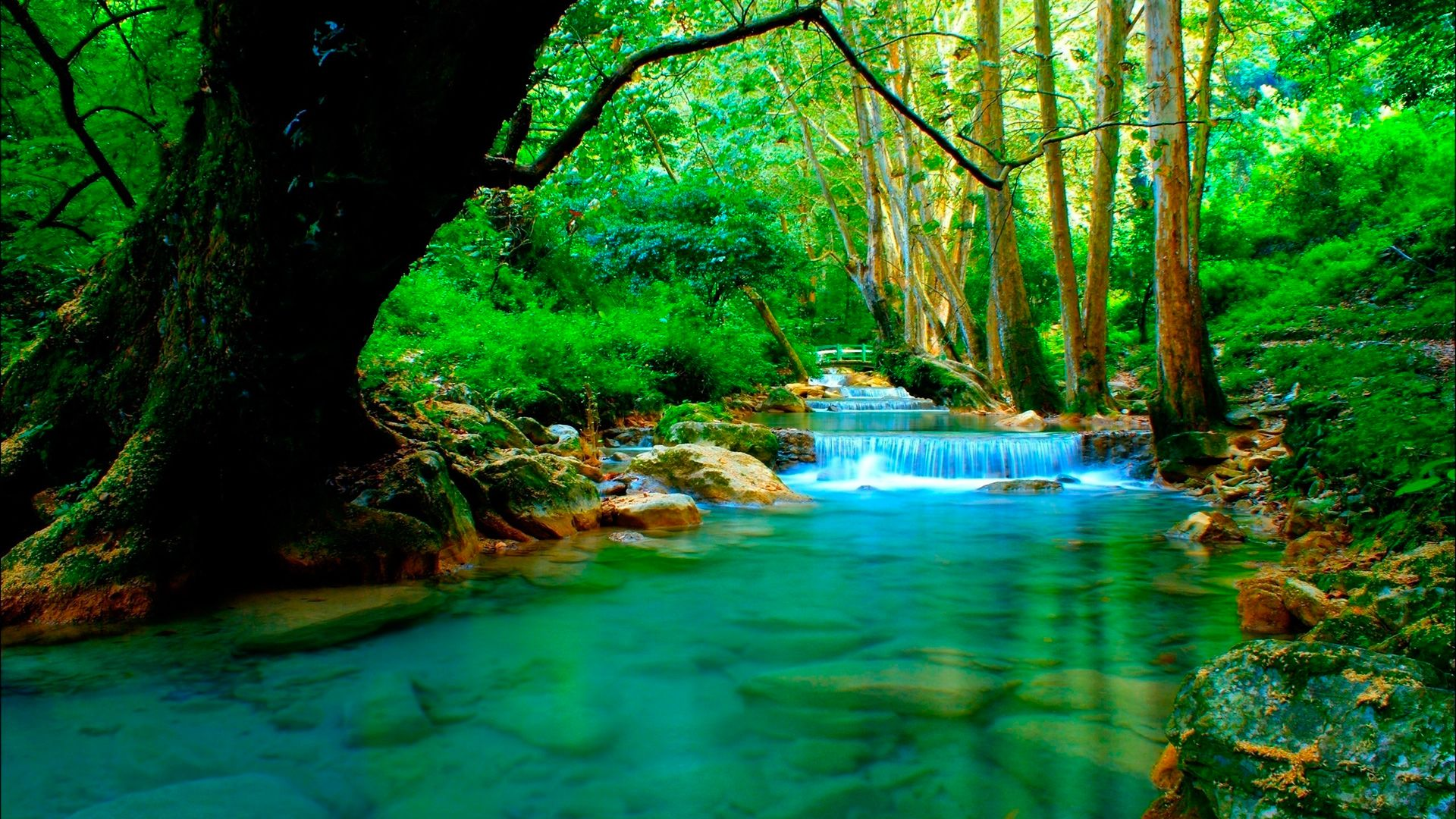 The Wallpaper River In Forest