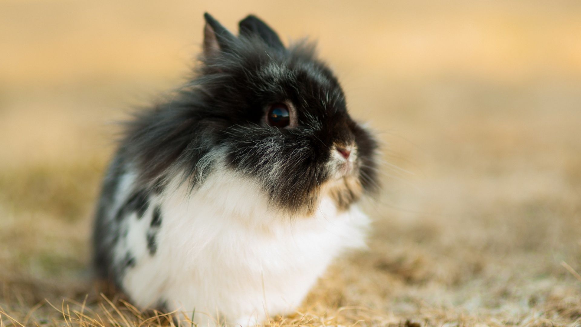 The Wallpapers Animals Rabbits